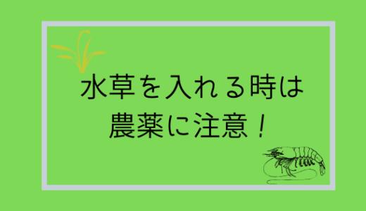 【やらないと死ぬ!】エビを飼う時は水草の農薬を取り除こう