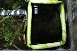 メダカ稚魚の飼育ネット