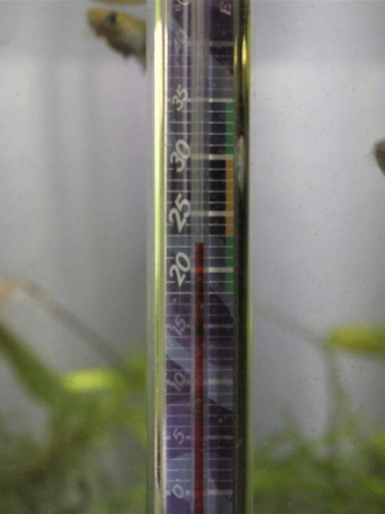 水槽用の温度計
