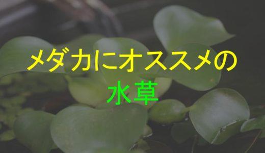 メダカの飼育にオススメの水草