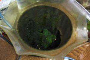 稚魚用の水槽