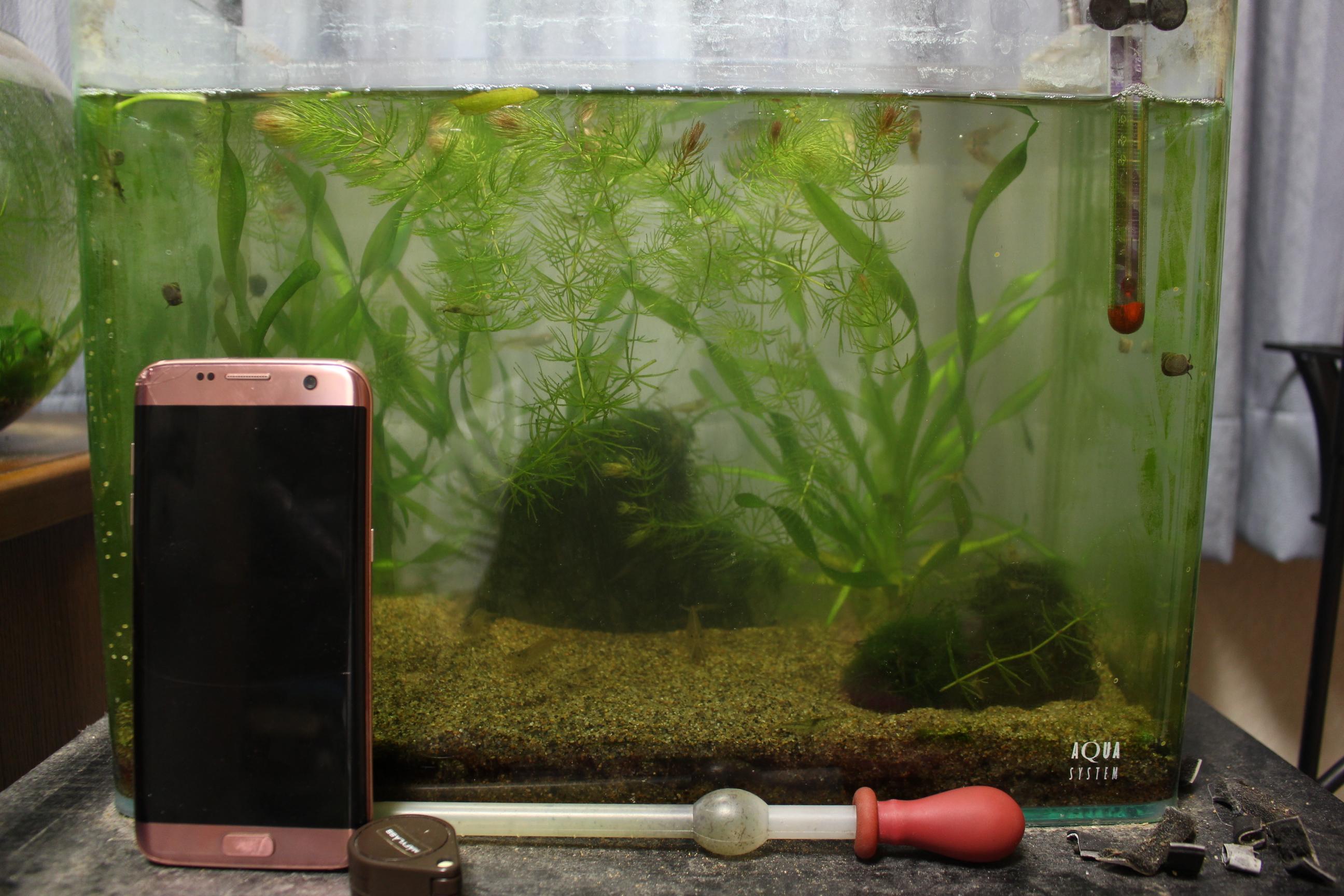 大きめの水槽