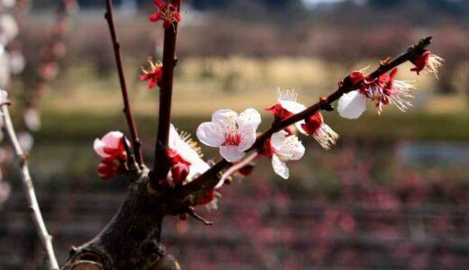 春のメダカの飼育について。おさえておきたいポイント
