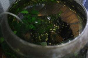 ソイルの水槽