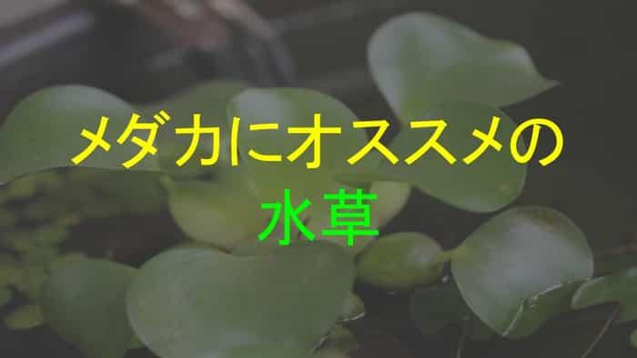 メダカにオススメの水草