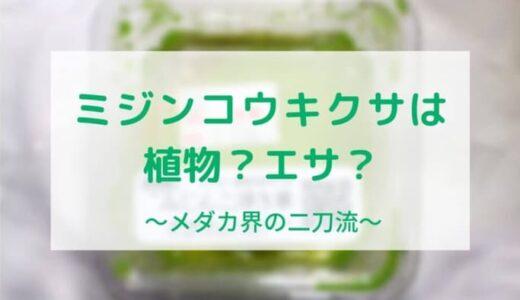 ミジンコウキクサは水草とメダカのエサの一人二役